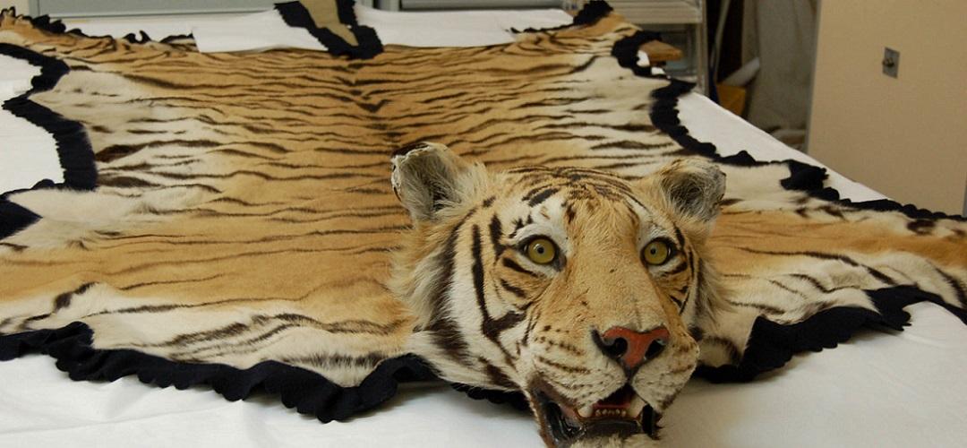 tigerrug